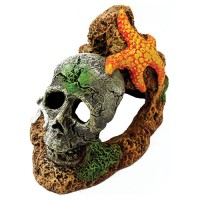 Blue Ribbon Pet Products exotic environments skull with starfish - small, 24 ea