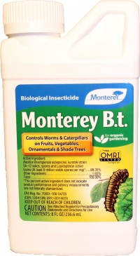 Monterey P monterey bt concentrate - 8 oz, 12 ea
