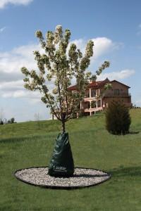 Dewitt Company P dew right tree watering bag - 20 gallon, 12 ea