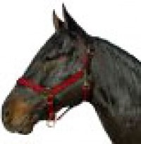 Horse And Livestock Prime halter leather crown econ - large, 1 ea